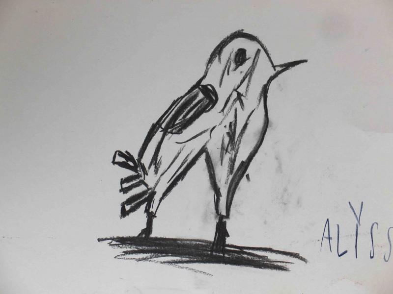 Kohlezeichnung Vogel